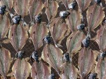 Fish. Drying stock photography