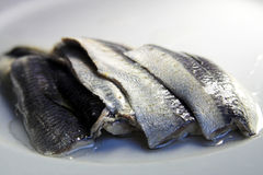 Fish. Fresh fish filets stock image