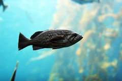 Fish. In the ocean Royalty Free Stock Image