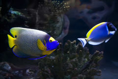 Fish. Beautiful exotic tropical fishes under water stock photo