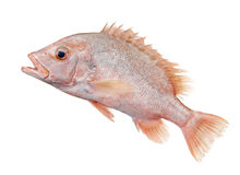Fish Stock Image