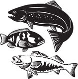 Fish royalty free illustration