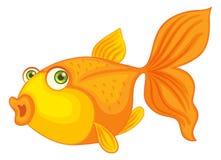 Fish. Illustration of fish on white Royalty Free Stock Photo