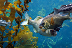 Fish. In the ocean Royalty Free Stock Photo