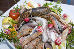 Fish. A plate with different kind of edible raw fish royalty free stock photos
