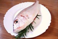 Fish. Fresh fish on white dish royalty free stock images