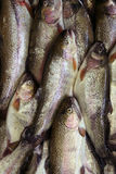 Fish. On a  market Royalty Free Stock Image