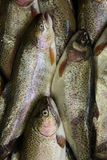 Fish. On a  market Royalty Free Stock Photo