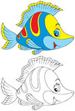 Fish. The black-and-white and color illustrations (over white) of the colorful coral fish Stock Images