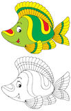 Fish. The black-and-white and color illustrations (over white) of the colorful coral fish Royalty Free Stock Photo