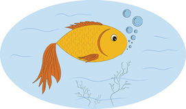 Fish. A fish made of water swimming in water Stock Image