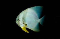 Fish Royalty Free Stock Photos