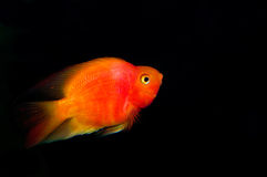 Fish. Living in lakes and oceans, there are quite a number of species Stock Photography