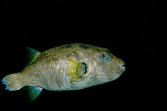 Fish. Living in lakes and oceans, there are quite a number of species Stock Photos