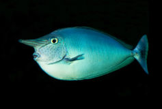Fish. Living in lakes and oceans, there are quite a number of species Royalty Free Stock Photos