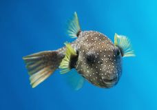 Fish Royalty Free Stock Images