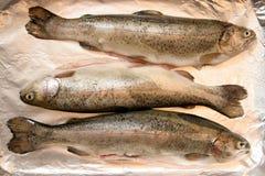 Fish Royalty Free Stock Image