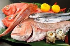 Fish. Many live fish,japanese food Royalty Free Stock Photos