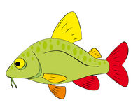 Fish. Very bright colorful painted fish Royalty Free Stock Photos