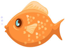 Fish Royalty Free Stock Photo