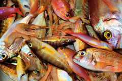 Fish. This is a photo of box with fish on the market royalty free stock images