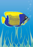 Fish. Vector illustration of tropical fish under water Stock Photo