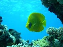 Free Fish Stock Photo - 17360830