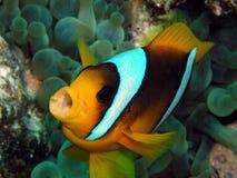 Free Fish Royalty Free Stock Photos - 17360848