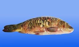 Fish. Royalty Free Stock Photography