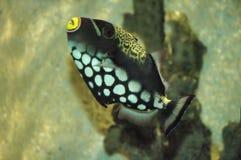 Fish. Exotic fish Royalty Free Stock Image