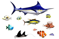 Fish. Different fish species in pose - isolated on white Royalty Free Stock Photo