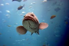 Free Fish Royalty Free Stock Photography - 1885537