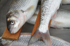 Fish. Es on a  market in Chalous Royalty Free Stock Photo