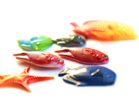 Fish stock photos