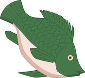 Fish. Plump green tilapia in side view Stock Illustration