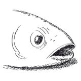 Fish. Vector illustration of fish head Royalty Free Stock Photography