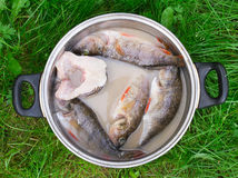 Fish. On a pan on green grass Royalty Free Stock Images