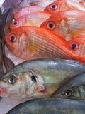 Fish. Some fresh fish on ice Royalty Free Stock Image