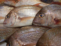 Fish. Some fresh fish on ice Stock Photography