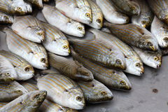 Fish. Healthy seafood at the bazaar Stock Photography