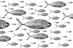 Fish. The illustration of a group of fish Royalty Free Stock Photography