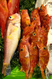 Fish. At market for sale Stock Image
