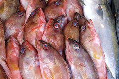 Fish. At market for sale Royalty Free Stock Images