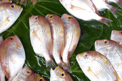 Fish. Red fresh fish on green leaf Royalty Free Stock Image
