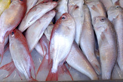 Fish. At market for sale Royalty Free Stock Photography