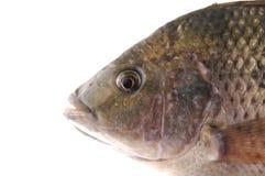 Fish. Close up fresh fish head Stock Images