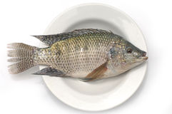 Fish. Fresh fish in the white plate Stock Image