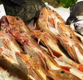 Fish Stock Images