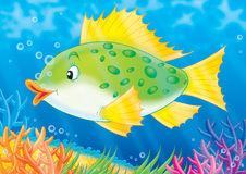 Fish. Illustration Stock Photos