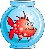 Fish. Red angry Comic fish in aquarium stock illustration